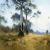 1921, Penleigh Boyd (fils de Arthur Merric et Emma Minnie, se tue en voiture en 1923 à 33 ans) : Ghost Gum at Kangaroo Flat