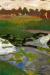 1900, Paula Modersohn-Becker : Landschaft mit Moorkanal