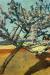 1903, Paula Modersohn-Becker : Liegender Mann unter bluhendem Baum