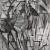 1912, Piet Mondrian : Eukalyptus